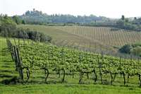 wine farm of 300 hectares for sale in Chianti
