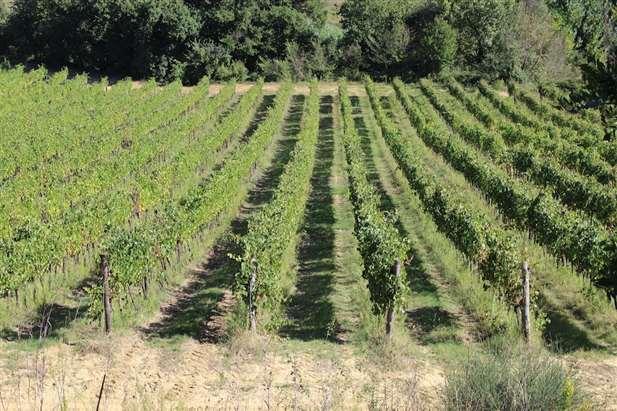 vendita azienda vinicola in toscana - Siena - Toscana