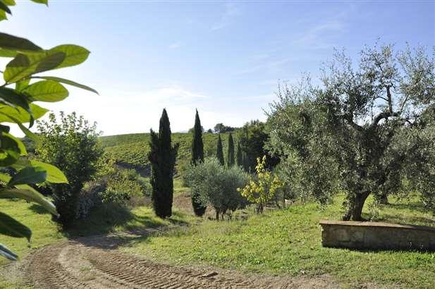 Matrimonio Azienda Vinicola Toscana : Vendita azienda vinicola in toscana siena